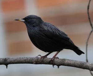 http://www.birdcontrol.net.pl/bird/polski/oferta/odstraszanie-ptakow-ploszenie-ptakow.html