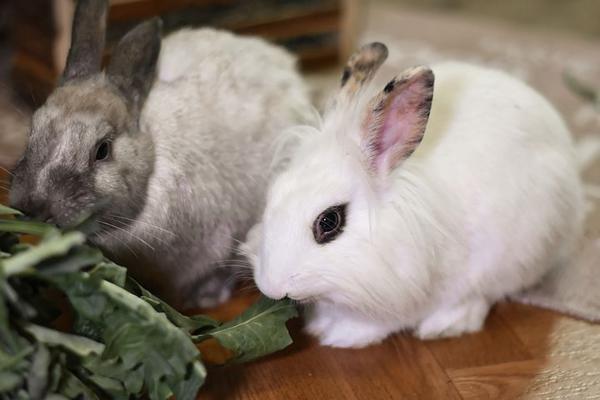 zioła dla królika cena