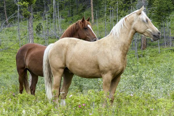 zestawy dla koni